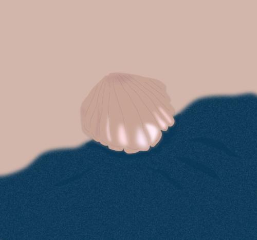 schelp, strand